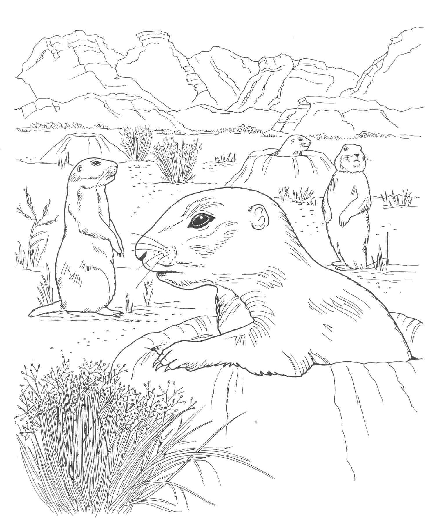 Prairie Coloring Pages For Kids